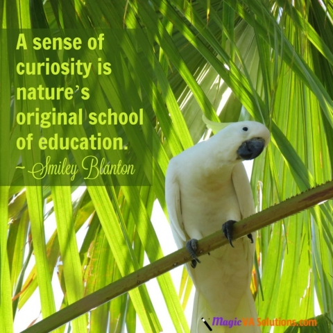 A sense of curiosity is nature's original school of education ~ Smiley Blanton
